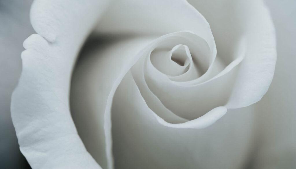 白い花の持つ効果とは?